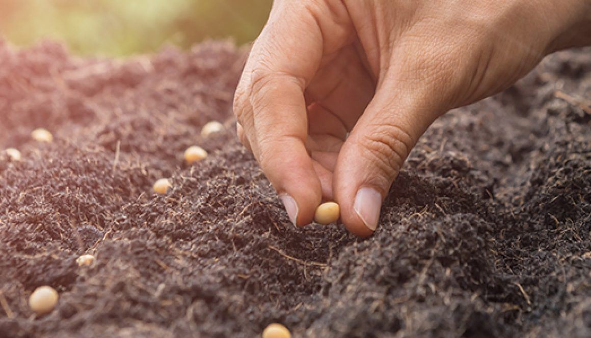 Direct Sowing-Starting Seeds Outdoors
